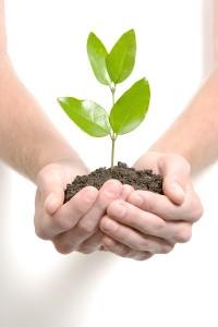 plant nuture 400-600